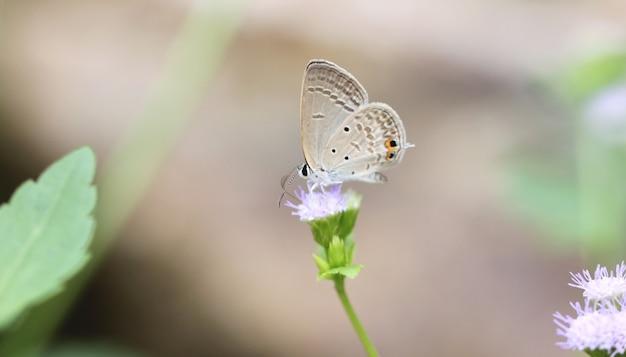 Коричневая бабочка на цветке.