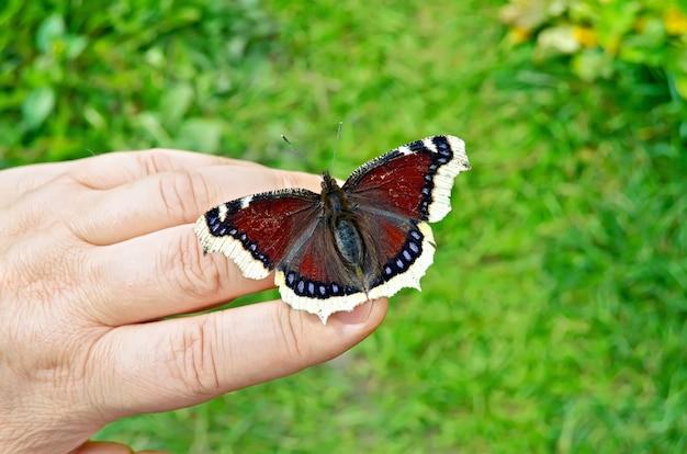 緑の草を背景に女性の手に翼に黒と白のパターンを持つ茶色の蝶