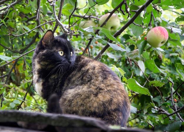 Коричневый кот в саду в летний день
