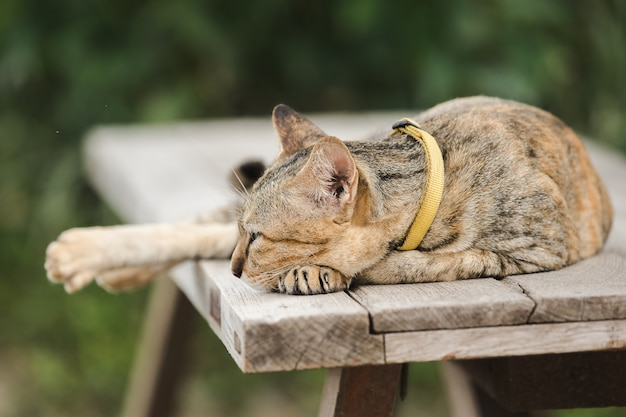 Brown cat lying on an old wooden chair
