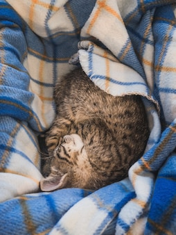 Brown cat sleeping on a blue striped blanket