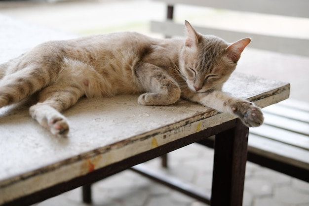 Brown cat sleeping resting on table