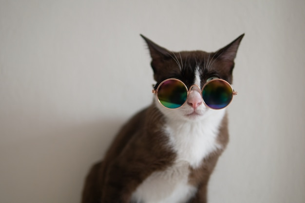 Brown cat with white mark wear metalic style glasses to party concept fancy dress up in funny and cool mood