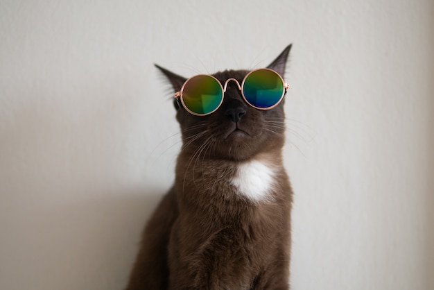 Коричневый кот с белой отметкой надевает очки в металлическом стиле, чтобы повеселиться в модном наряде