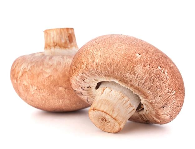 Brown champignon mushroom isolated cutout