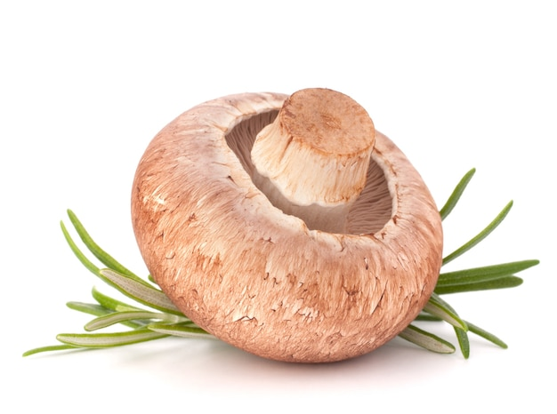 Brown champignon mushroom and rosemary leaves isolated cutout