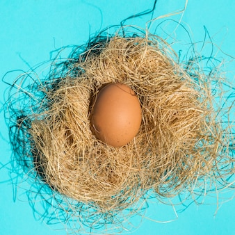 Brown chicken egg in nest on table