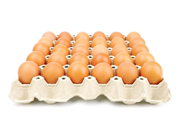 Brown chicken eggs in the cardboard egg tray with rooms for thirty eggs isolated on white background