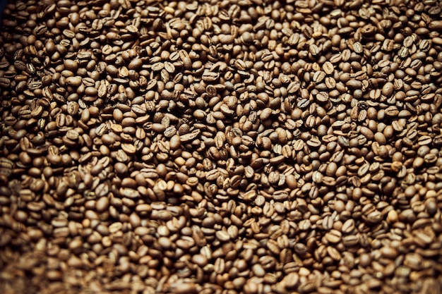 Brown coffee beans or seeds of arabica coffee plant background