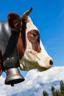 アルプスの山、フランスの茶色の牛