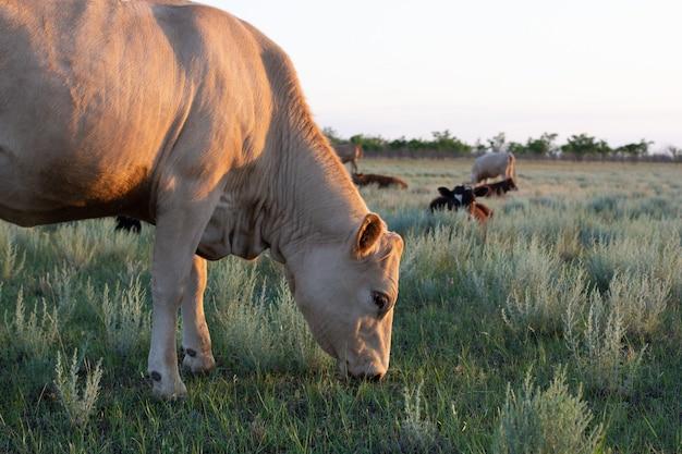 Коричневый портрет коровы в сельской местности русской степи