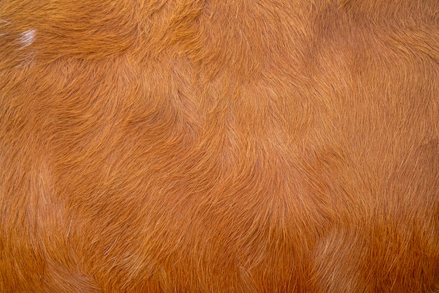 Brown cow skin texture. agriculture. smooth surface.