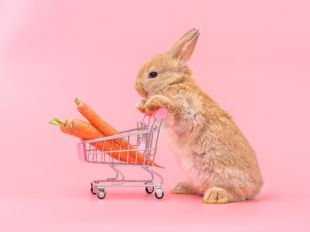 Brown cute baby rabbit standing and hold the shopping cart with baby carrots.