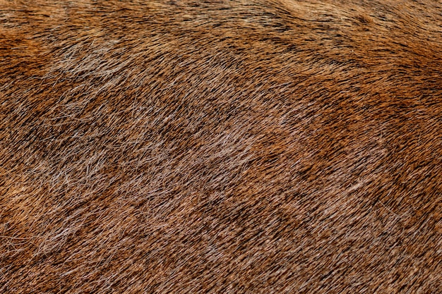 Brown deer fur used as a background