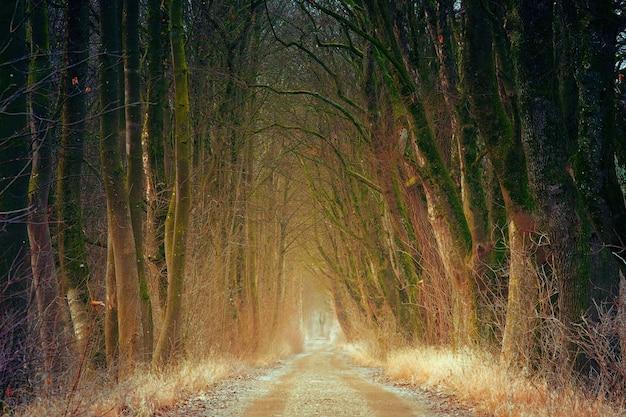 낮 동안 나무 사이 갈색 비포장 도로