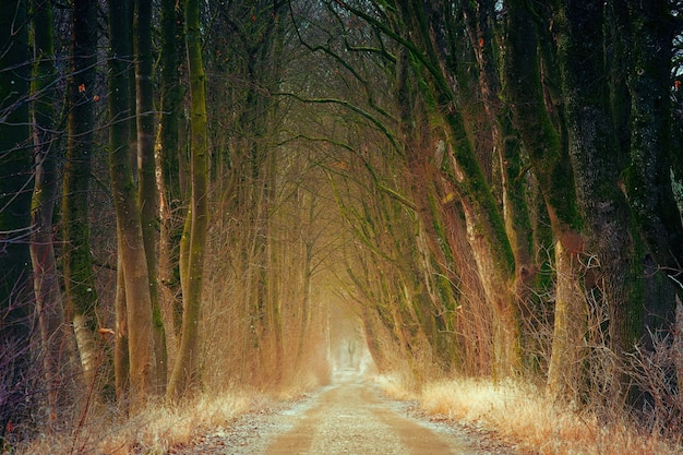 Strada sterrata marrone tra gli alberi durante il giorno