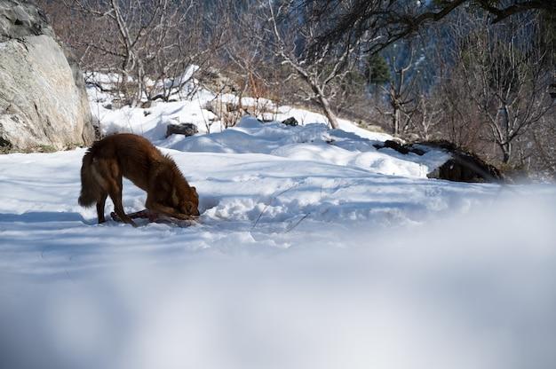冬の公園で茶色の犬