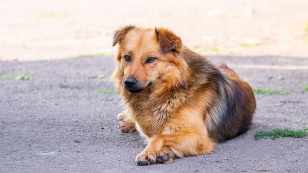 日陰のアスファルトに横たわる茶色の犬