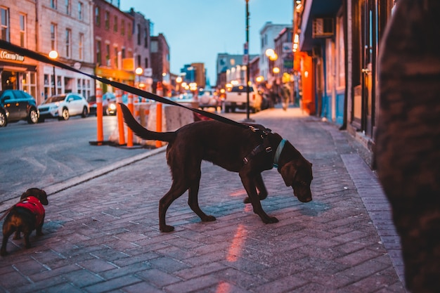 Brown dog on road in evening