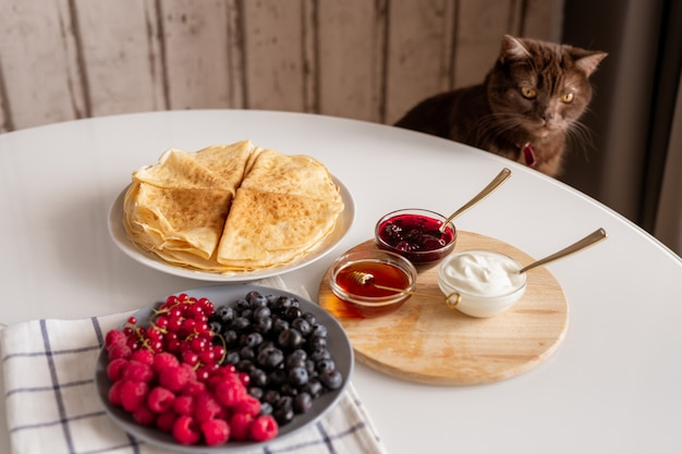 Brown domestic cat sitting by kitchen table with fresh berries, appetizing homemade pancakes and bowls with honey, sourcream and jam