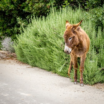 Brown donkey standing on the side of a road with green plants