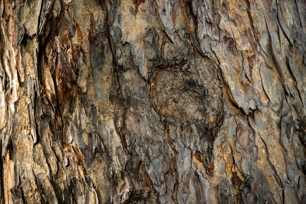 The brown and dried bark on the tree has rough texture.