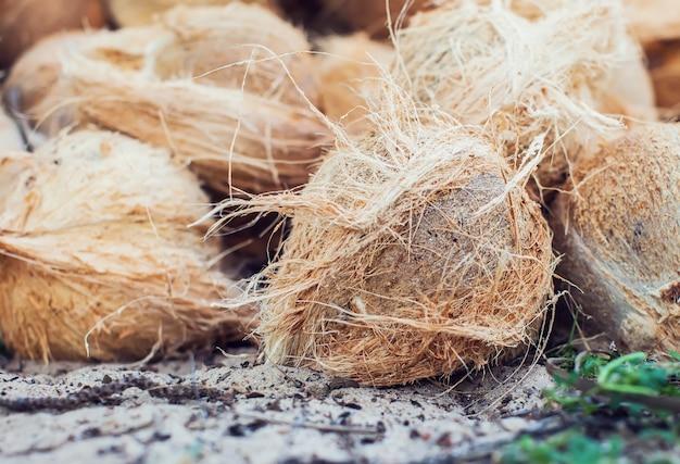 지상에 갈색 건조 코코넛