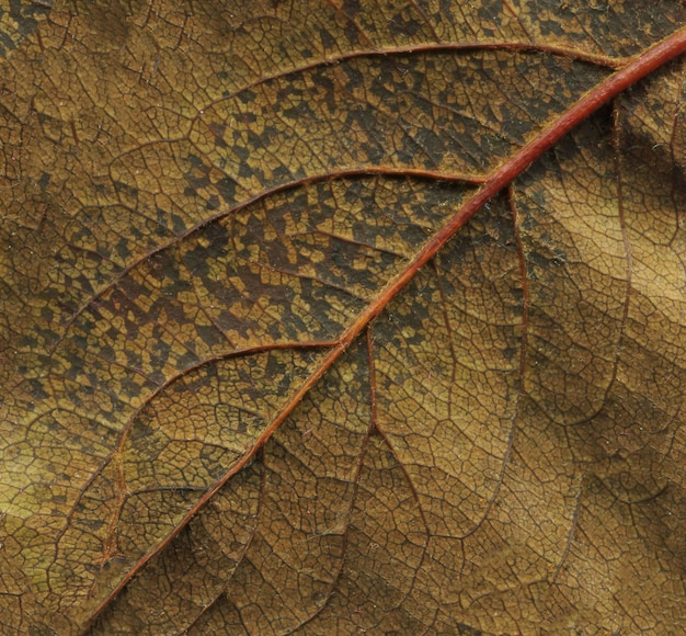 Brown dry leaf background