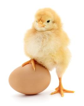 Коричневое яйцо и курица, изолированные на белом фоне