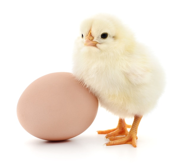 Brown egg and chicken isolated on a white background