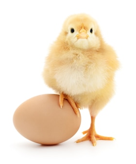 Brown egg and chicken isolated on a white
