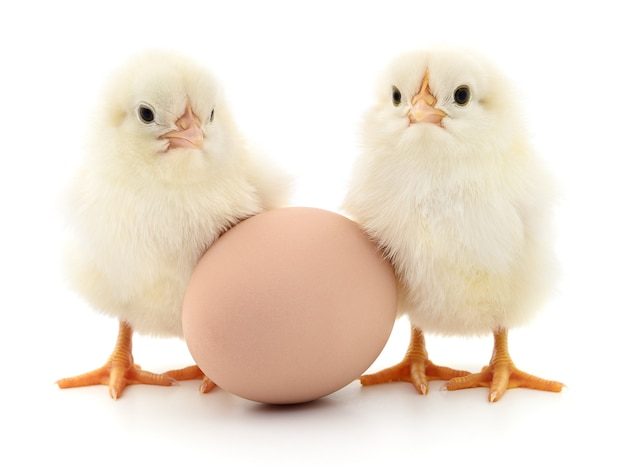 Brown egg and two chickens isolated on white background
