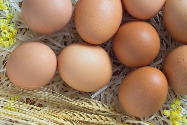 Brown eggs in the straw