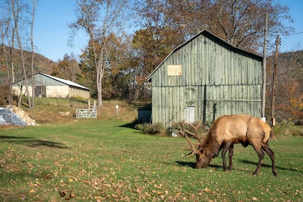 Коричневый лось в красивой траве с деревьями в стене