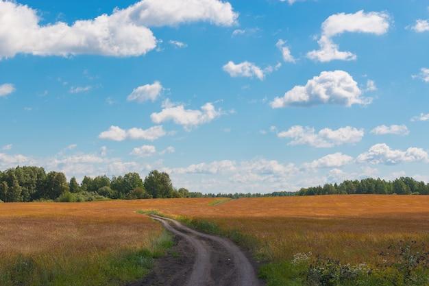 茶色の野原と遠くの緑の森、夏の日の青い空。魔法のパノラマ風景の場所