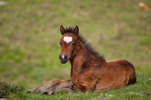 Brown foal lying on the ground surrounded by hills covered in greenery