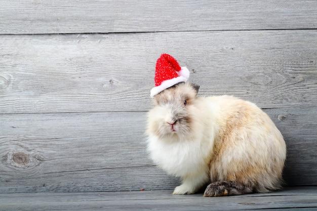 빨간 산타 크로스 모자, 나무 배경을 입고 갈색 모피 흰 토끼. 크리스마스 컨셉