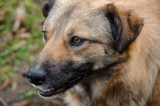 自然の中で外を見ている茶色のジンジャー ホームレス犬