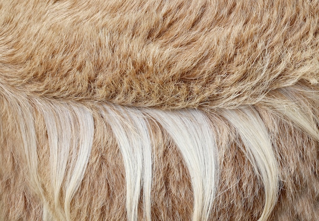 Brown goat hair texture