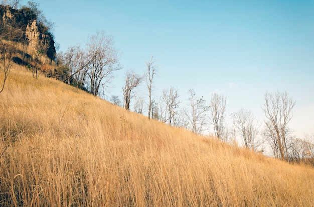 푸른 하늘 언덕에 갈색 잔디
