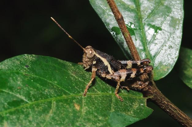 자연과 조화를 이루는 잎에 갈색 메뚜기