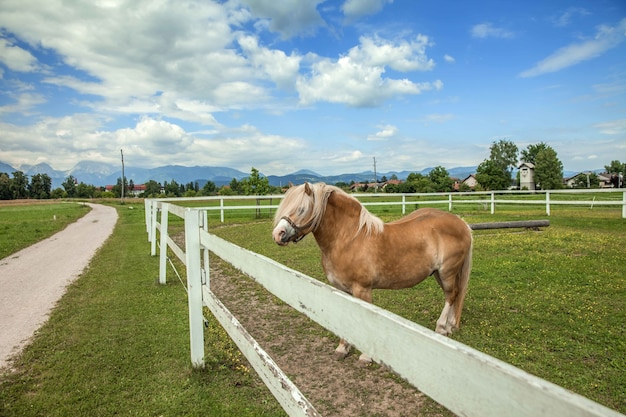 Brown horse in farmland surrounded by wooden fence under a cloudy sky