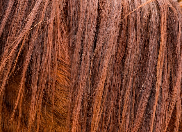 Brown horse fur and mane texture or backgrounde
