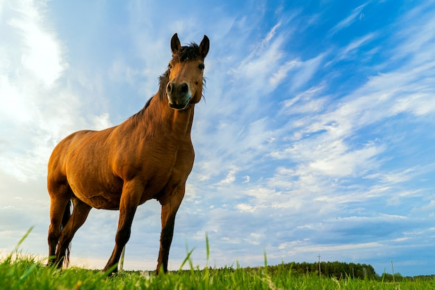 A brown horse grazes in a meadow against a blue sky