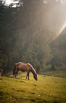 Brown horse grazing in a field on a sunny day
