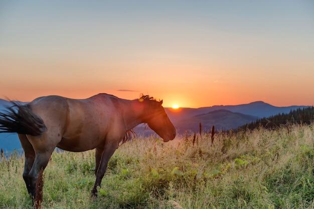 日没時に野原で放牧している茶色の馬