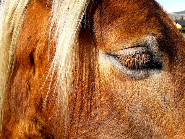 Brown horse head with white profile hair