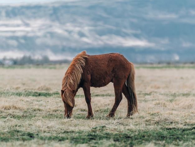 햇빛 아래 잔디로 둘러싸인 필드에 갈색 말