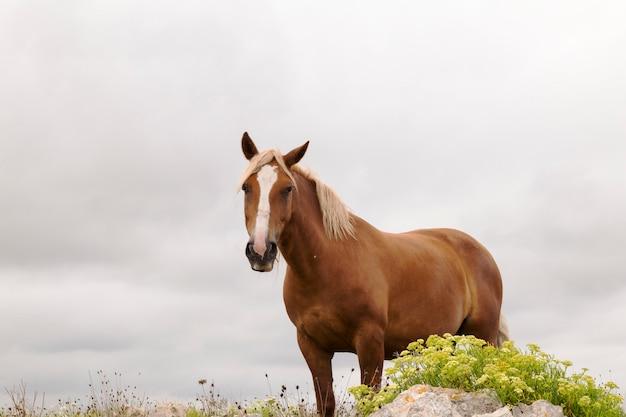 Коричневая лошадь в зеленом поле