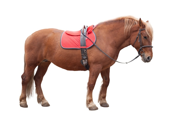 白で隔離茶色の馬
